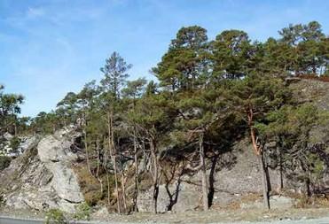 Tomt 45 – Panoramabilde tatt fra tomten