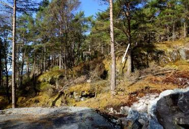 Tomt 64 – Med skogen utenfor stuedøren