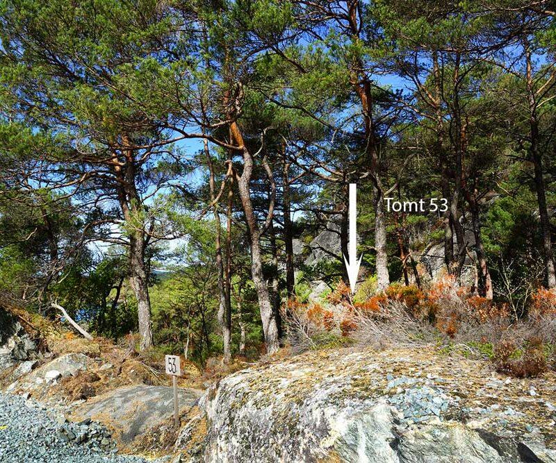 Tomt-53---Lunt-i-skogen